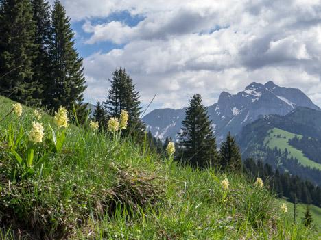 Orchis pâle devant les Cornettes de Bise